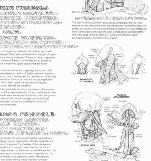 Wynn Kapit Anatomy Coloring Book